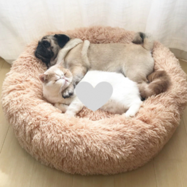 מיטות וערסלים חתולים וכלבים